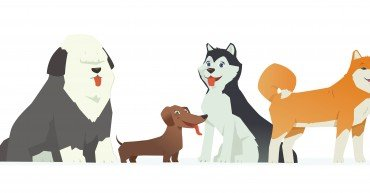 Cute dogs - modern vector cartoon characters illustration on white background. Different breeds of these pets, dachshund, bobtail, husky, akita inu. High quality composition for your banner, poster